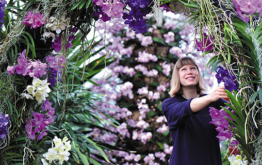A horticulturalist inspects orchids at the annual Orchid festival